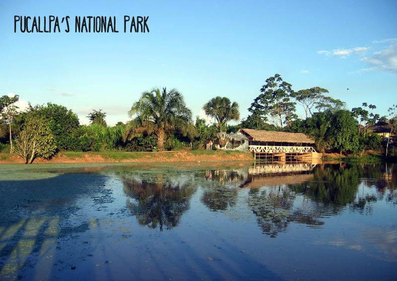 the-deep-amazonian-jungle-pucallpa-puerto-maldonado-pariwana-hostel-05