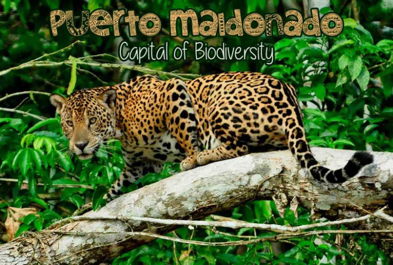 Puerto-Maldonado---capital-of-biodiversity---Pariwana-hostel-01