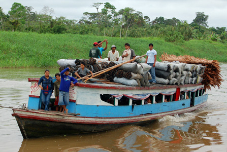 Colectivo on the Tahuayo River. Photo by Campbell Plowden/Center for Amazon Community Ecology