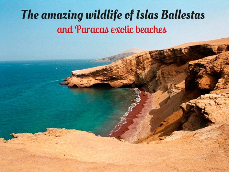 The-amazing-wildlife-of-Islas-Ballestas-and-Paracas-exotic-beaches-Pariwana-hostels.com_